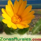 logo zonas-rurales